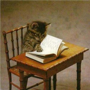 cat reading 03