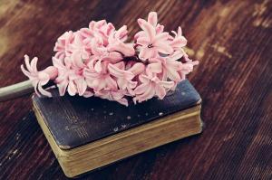 hyacinth-744061_640